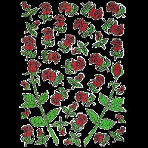 Stickers Røde Roser